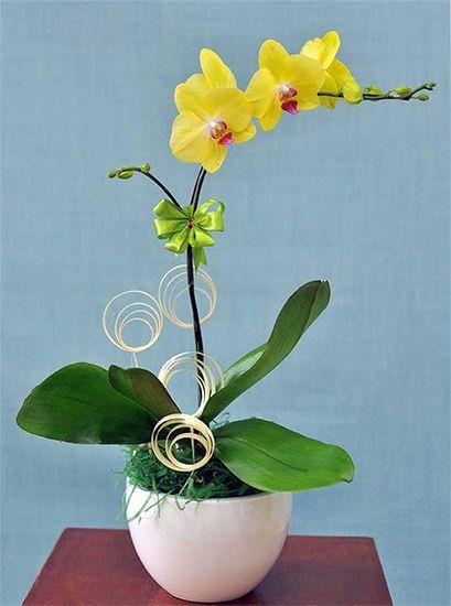 Lan Hồ Điệp là loài hoa rất ý nghĩa