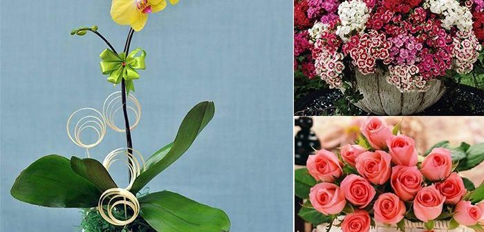 Những loài hoa tặng mẹ nhân ngày 8/3 vô cùng ý nghĩa