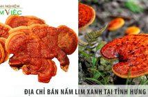 Địa chỉ bán nấm lim xanh tại tỉnh Hưng Yên uy tín nhất