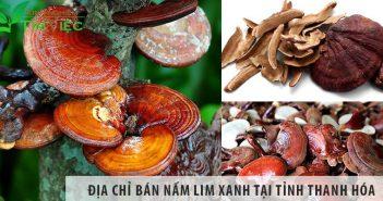 Địa chỉ bán nấm lim xanh tại tỉnh Thanh Hóa uy tín số 1
